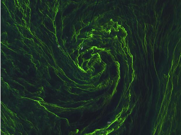 Copernicus Sentinel data (2015)/ESA